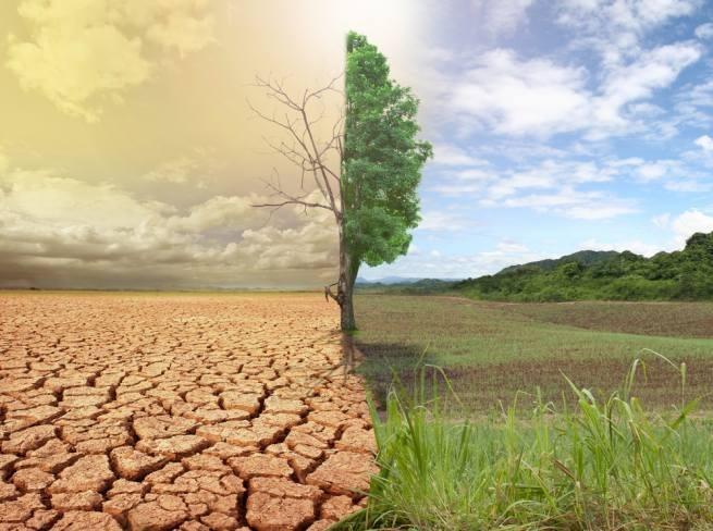 Сильная жара засуха реферат 4752